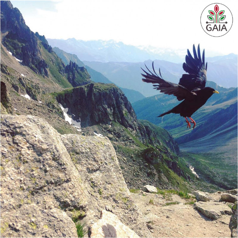 appel à projets Take flight and travel ecologically across Europe!