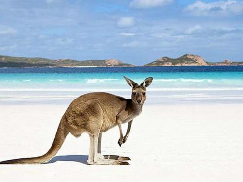 The Australian way of life: cultural immersion and exploration of aquatic fauna